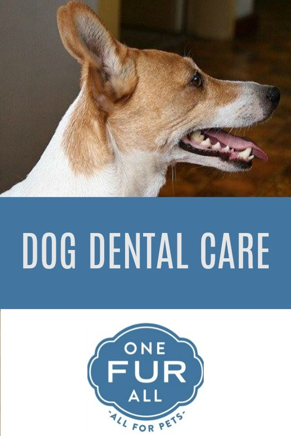 The Importance Of Dental Care For Pets Onefuralll Website Pet House Candles Pets Pet Dogs Dogs