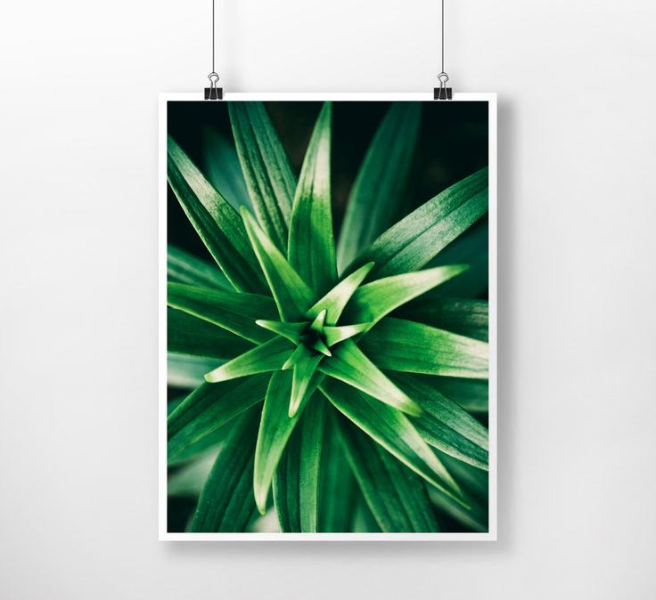 Green Succulent Plants Instant Download Digital Print , Nature, Wall Decor, Botanical Art, Large Printable Poster, Modern, Minimalist by PrintingDots on Etsy