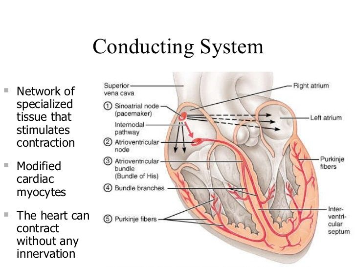 16 Best Conduction System Of The Heart Images On Pinterest