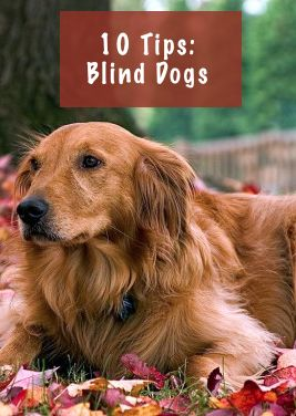 Tips for taking care of your blind pet.