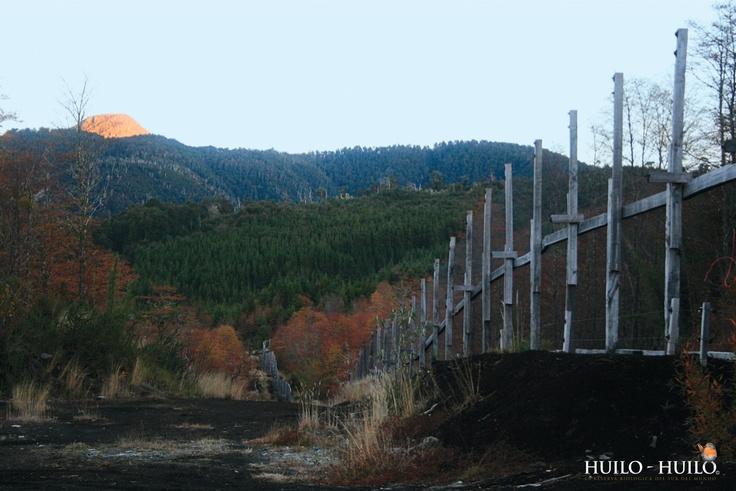 Centro De Conservación Del Huemul Del Sur. Huilo Huilo