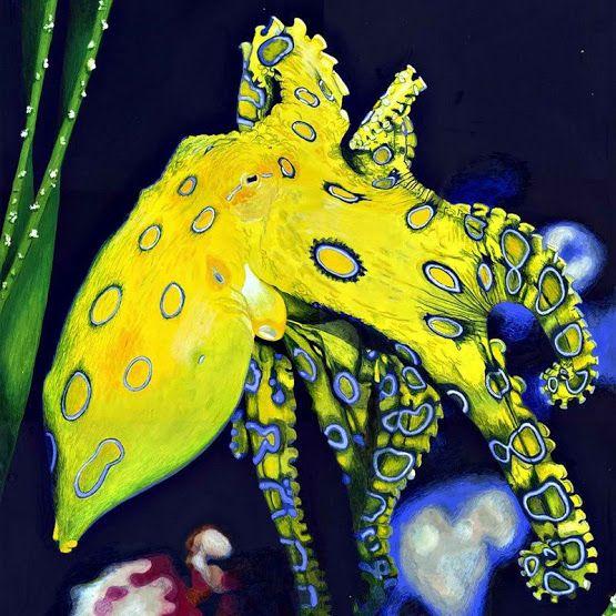 La mayoría de los pulpos venenosos que existen.  En las aguas costeras de Australia y Japón, hogar de hapalochlaena (Hapalochlaena), reconocido como el más venenoso del mundo. De tamaño pequeño, son extremadamente agresivo y mortal para los seres humanos. Si te acercas demasiado a los cefalópodos, que no tiene miedo de atacar primero. Pulpo de anillos azules es capaz de matar a más de 25 personas en un solo ataque.  Yad pulpo tiene la acción más fuerte de los agentes nerviosos. Se propaga…