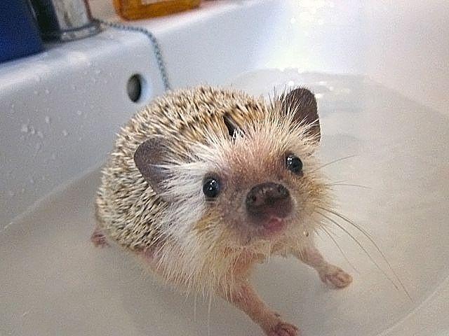 A bañaaar!!!