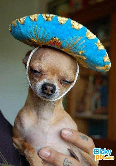 Dogs For Sale Medicine Hat