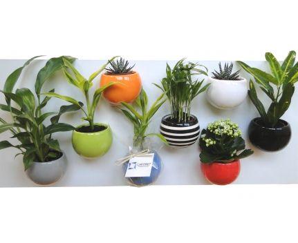 Plante céramique pot aimanté en image