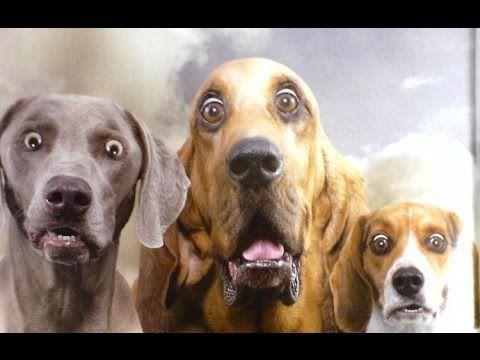 Подборки видео про собак.Приколы про животных 2016 Прикольные!Смешные!Юм...