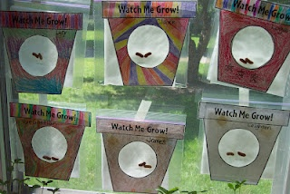kinderdi: Pocket Gardens in a plastic baggie taped to window...wet paper towel, beans, colored flower pot with circle cut out to watch the bean sprout and grow out the top of the baggie!