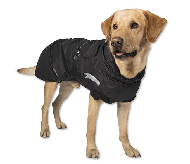 All-Weather Dog Parka