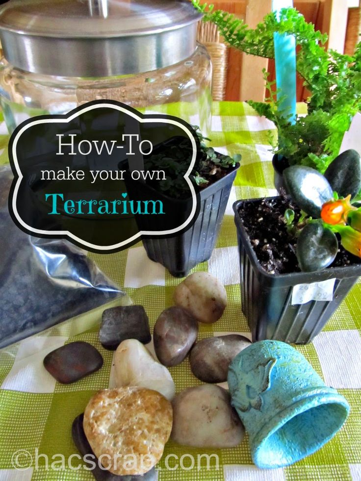 9 best images about terrarium on pinterest miniature for How to make your own fish tank