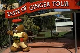 The ginger factory celebrates ginger in all its farms