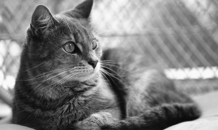 Muerte súbita en gatos, ¿por qué ocurre?
