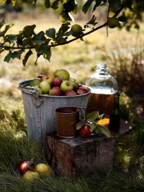 Apple picking and homemade cider