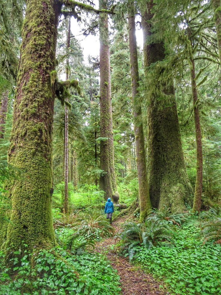 Beyond the Beaten Track Vancouver Island road trips - Carmanah Walbran Valley