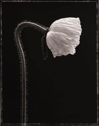 Seamus A Ryan - love the black & white