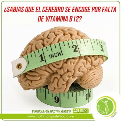 Nutricion Estetica: ¿Sabias que el cerebro se encoge por falta de vita...