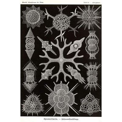 Buyenlarge 'Spumellaria' Graphic Art Print – Tadasu Yamamoto