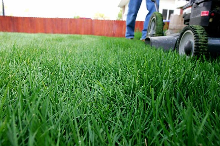 Month-by-Month Care Calendar for Cool-Season Lawns