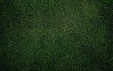 Трава, текстура, растения фото на рабочий стол на весь экран