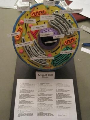 How to Build an Animal Cell Model with Styrofoam and Clay - Yahoo! Voices - voices.yahoo.com