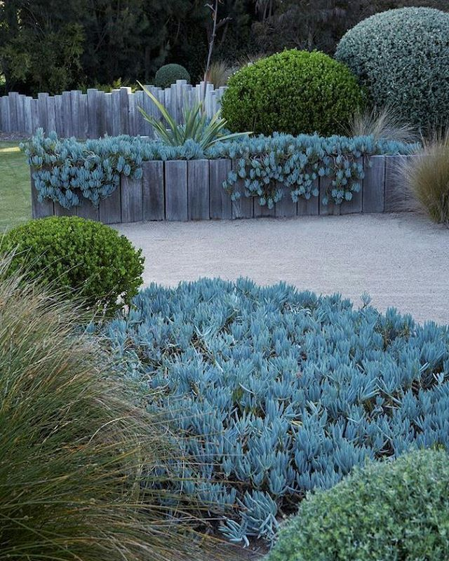 10 Best Atlanta Landscape Design Images On Pinterest: 10 Best Succulent Garden Of Attila And Michele Kapitany
