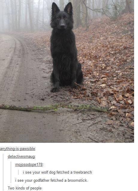 I immediately saw Sirius too...