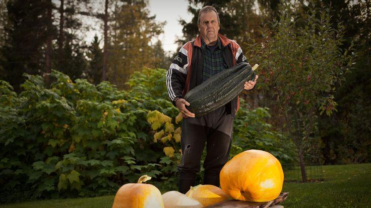 Master of Pumpkins