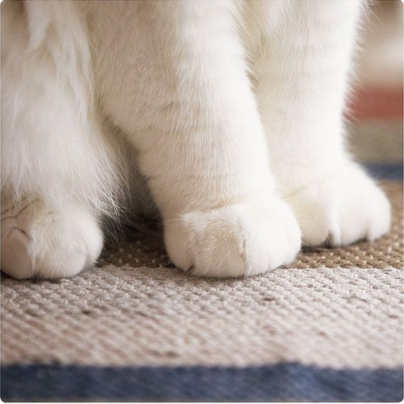 可愛すぎて困る!!猫の手の写真集「ねこのおてて」が発売   ADB