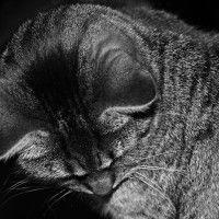 #dogalize Le orecchie calde di un gatto, cosa vogliono segnalare? #dogs #cats #pets