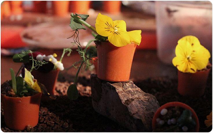 Tiny flowerpots made of chocolate