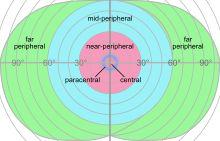 Peripheral vision - Wikipedia