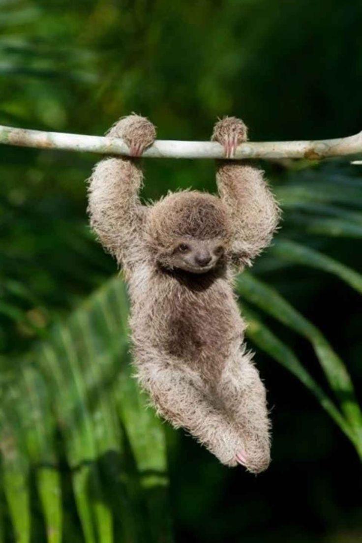 Sloth going to the bathroom - Gymnast Sloth On The High Bar