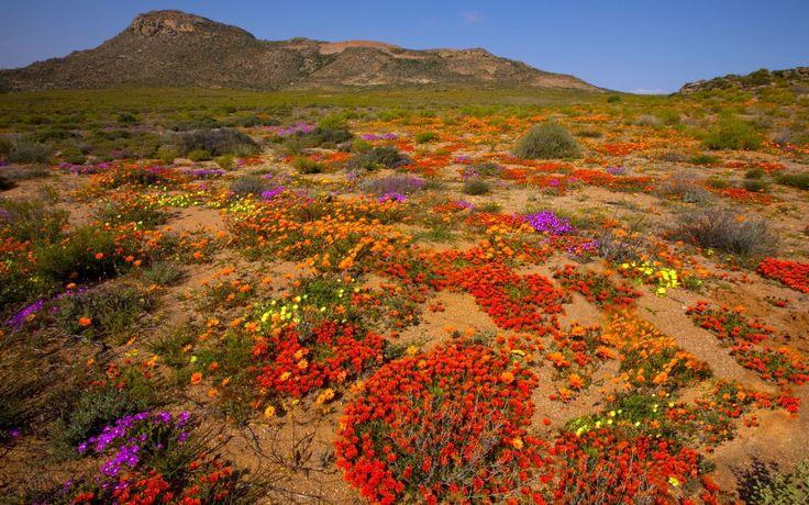 Namaqualand es el nombre de una región árida en el suroeste de África. Se extiende a lo largo de más de unos 1000 km de la costa oeste cubriendo un área de 440 000 km2. Es una zona escasamente poblada por algunos miembros de la etnia khoikhoi está principalmente en la región Karas de Namibia. Si bien es un lugar árido, Namaqualand se llena de flores silvestres a comienzos de la primavera.