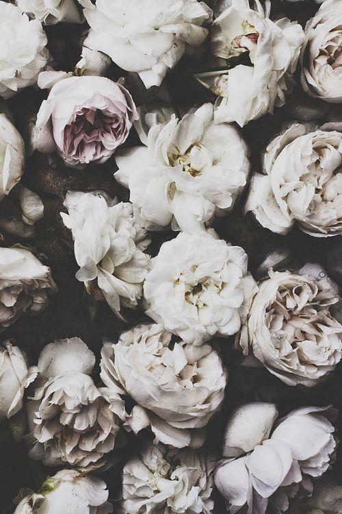Vintage roses - gorgeous white texture