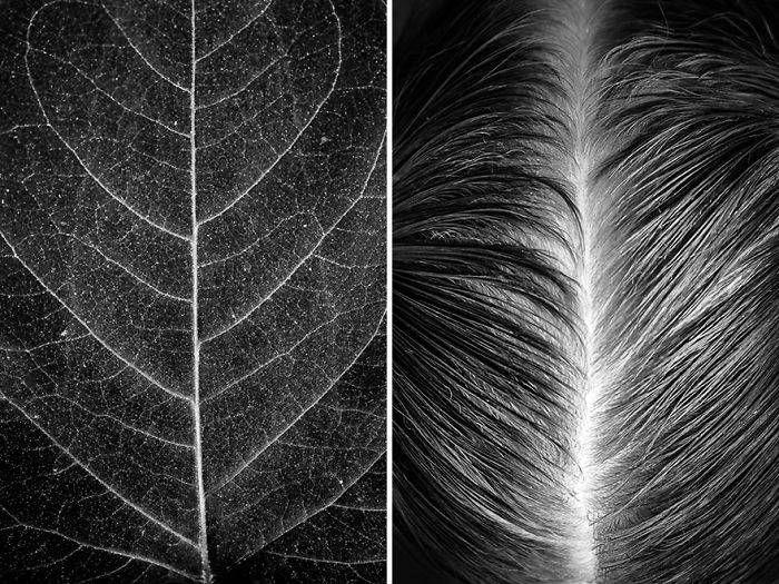Der Künstler zeigt die Schönheit des menschlichen Körpers, indem er ihn mit Elementen der Natur kombiniert