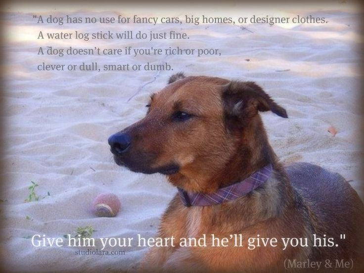 how to tell if your dog doesn't love you