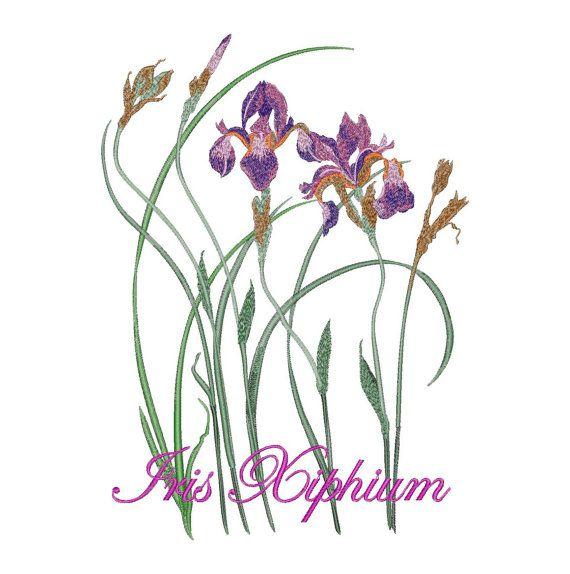 Iris Xiphium. Flowers - Machine Embroidery Design - Instant Download - Four…
