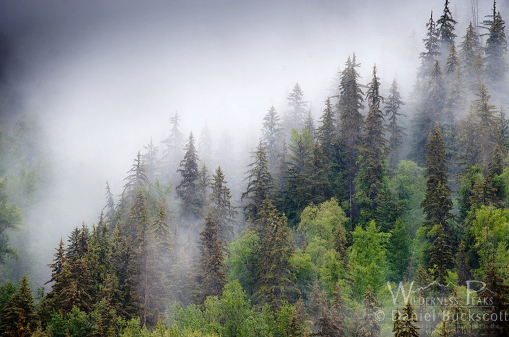 Thick clouds pass through the trees of the Tongass National Forest in Southeast Alaska.   This is America's largest National Forest and has the highest bio-mass of any eco-system in the world.