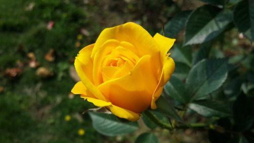 New free stock photo of summer garden yellow