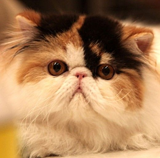 19 Best Interesting Facts And Research About Cats Great