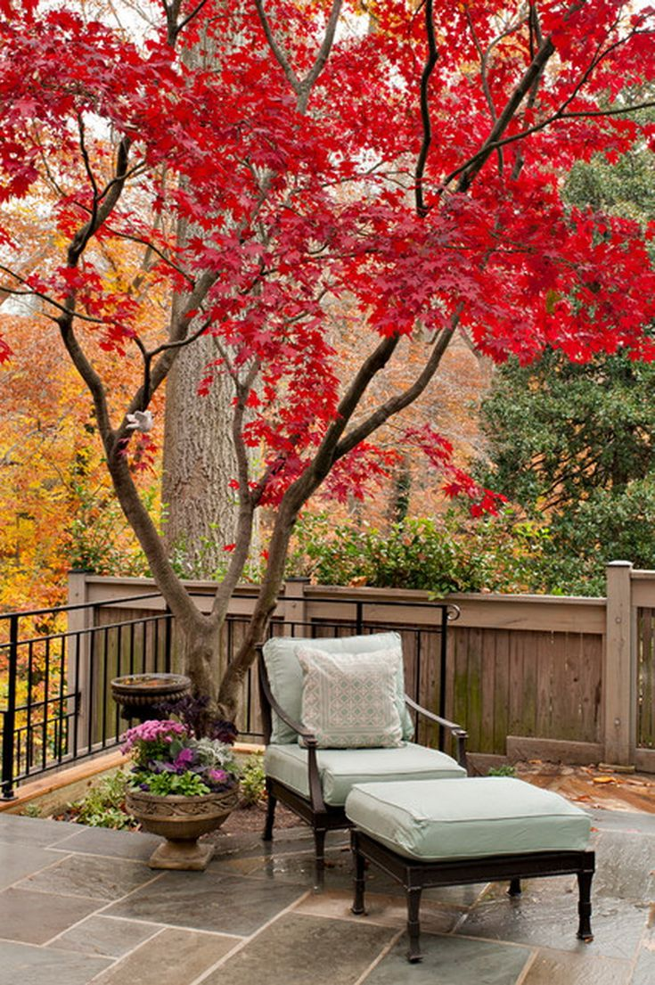 Cozy Red Japanese Maple Tree Garden Patio on Traditional Deck