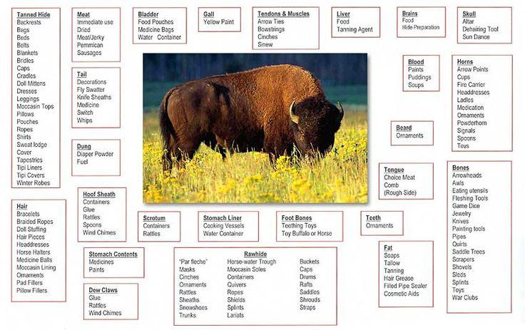 Traditional Uses of Buffalo