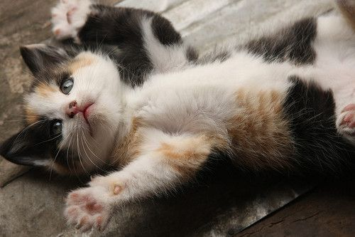 vOuic-end !!!: Funny Kitty, Barra Photography, Calico Kittens, Hold Me, Juan Barra, Cute Kittens, Animal, Baby Cat, Calico Cat