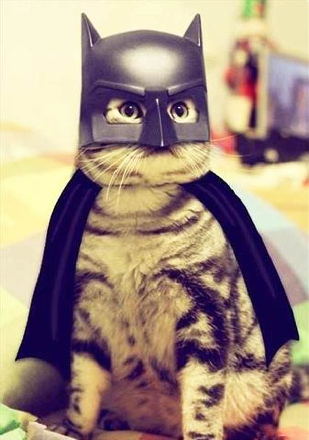 "Andrea said ""Had to add for Caymen, he asked if that cat was wearing his Batman mask. Lol"""