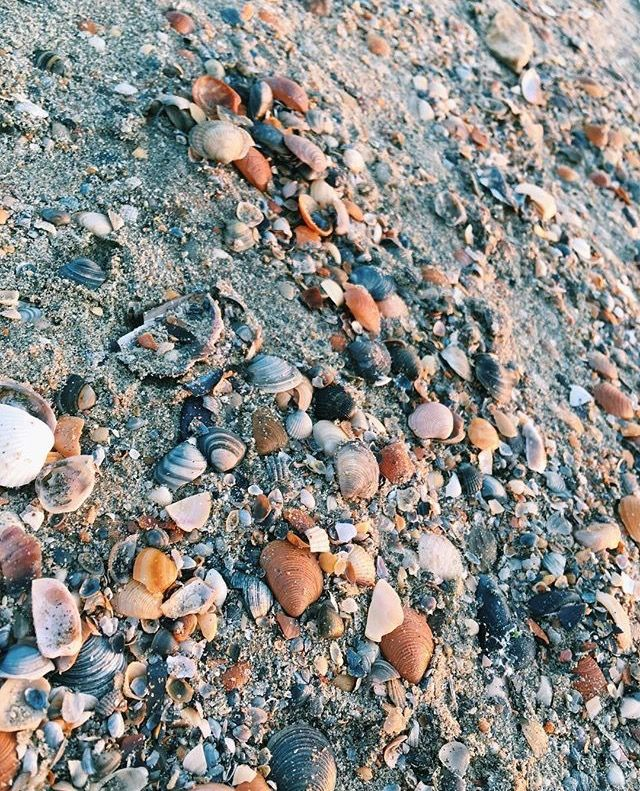 #attheshore #seaside #shells