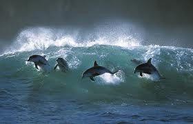dolphins byron bay