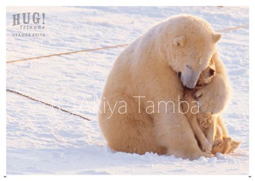 シロクマ:犬をハグ! 奇跡の瞬間捉えた写真集が人気 - 毎日新聞