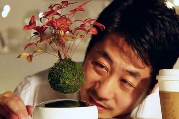 Настоящих профи садоводства удивить не так-то просто. Но японцам, похоже, это удалось. В Стране восходящего солнца научились делать летающие деревья бонсай. Фокус в том, что в вазонах замаскированы два магнита — один в подставке, второй — в горшке. Как уверяют проектировщики, на развитие растений это никак не влияет. Уход за зелеными питомцами ни чем не отличается от обычного. На реализацию проекта изобретатели собирали деньги всем миром.