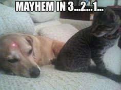 Funny Cat Pictures with Captions Cheeseburger | funny caption picture mayhem in 3 2 1 red dog on dogs head cat about ... #smartcat - Know more about your cat at Catsincare.com!
