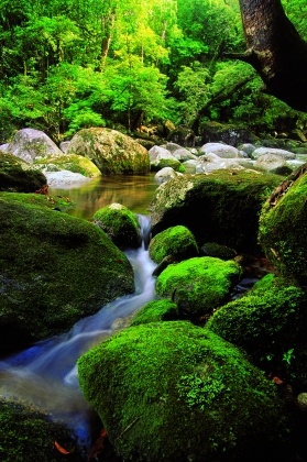 Tropical North Queensland - rainforest