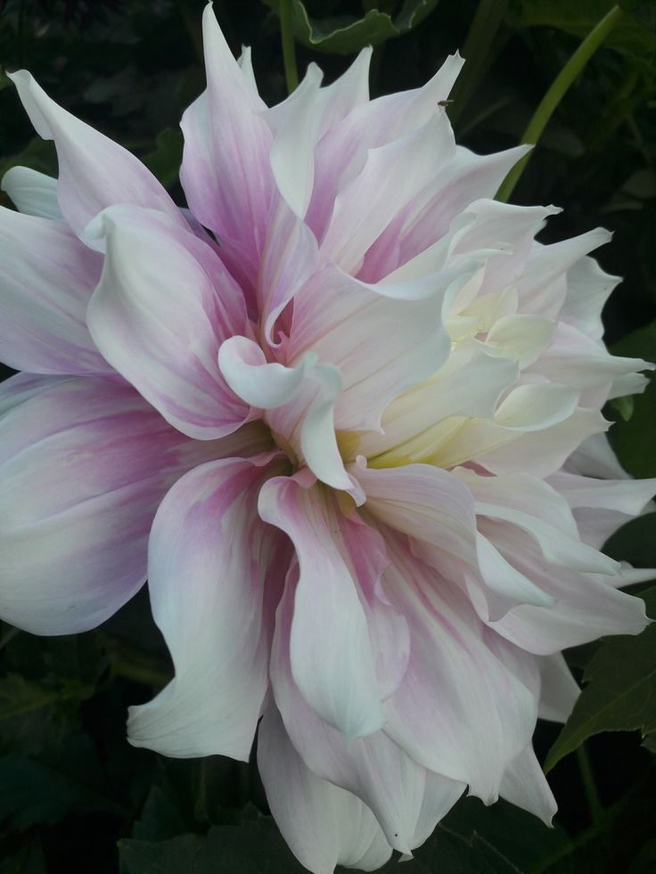 "Have no words.... Nature creates wunderful things. Dahlia 💗 Go to ""Botaniska"" in Lund"